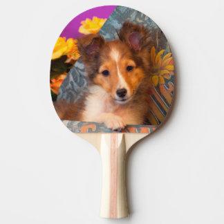 Raquette Tennis De Table Chiot de chien de berger de Shetland dans une