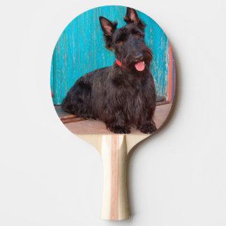 Raquette Tennis De Table Écossais Terrier se reposant par la porte colorée