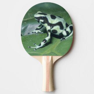 Raquette Tennis De Table Grenouille de dard de poison, (auratus de