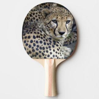 Raquette Tennis De Table guépard