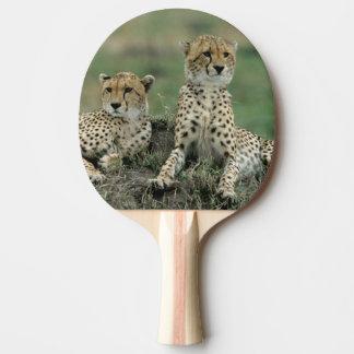 Raquette Tennis De Table L'Afrique, Kenya, guépards