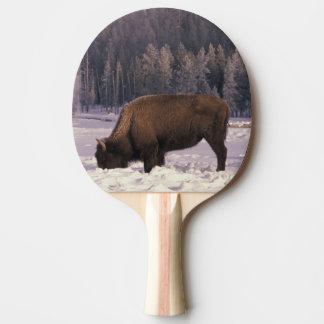 Raquette Tennis De Table L'Amérique du Nord, Etats-Unis, Wyoming,