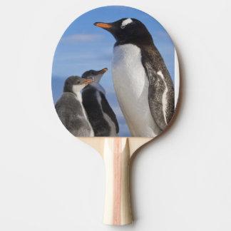 Raquette Tennis De Table L'Antarctique, crique de Neko (port). Pingouin 2