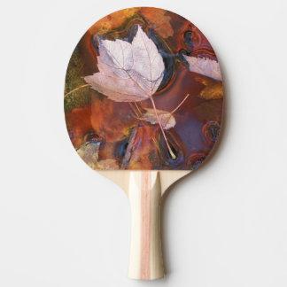 Raquette Tennis De Table Les Etats-Unis, du nord-est, automne partent dans