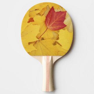 Raquette Tennis De Table Les Etats-Unis, Washington, arborétum de pinson,