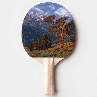 Raquette Tennis De Table Les Etats-Unis, Wyoming, Teton grand NP. Un cèdre