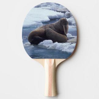 Raquette Tennis De Table Na, les Etats-Unis, l'Alaska, morse et jeunes sur