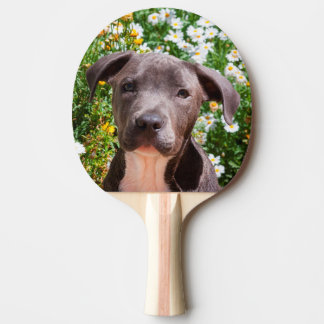 Raquette Tennis De Table Portrait de chiot de bull-terrier du Staffordshire