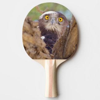 Raquette Tennis De Table Un serpent Blanc-breasted Eagle