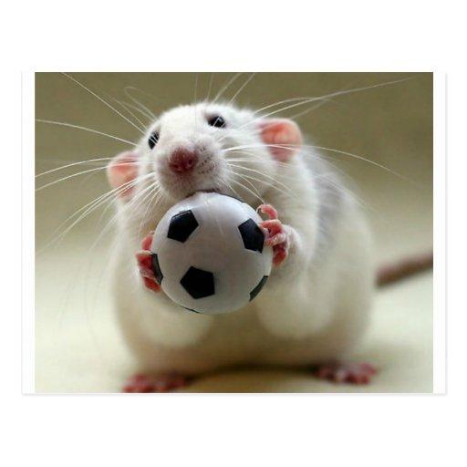 rat_mignon_jouant_au_football_cartes_postales-rf5f5c2b66d3146fcb4c2396c3a767e72_vgbaq_8byvr_512