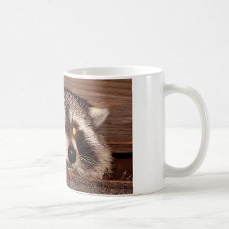 Raton laveur mug