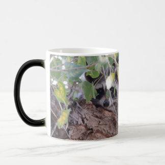 Raton laveur mug magic