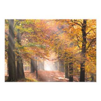 Rayons de soleil dans une copie de photo de forêt