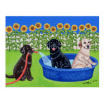 Réception au bord de la piscine drôle Labradors Cartes Postales
