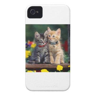 Recherchant les chatons gris et oranges d'aventure coque iPhone 4