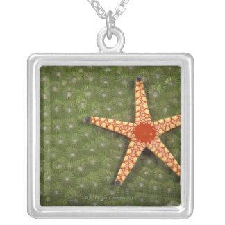 Récifs de nettoyage d'étoile de mer en mangeant collier