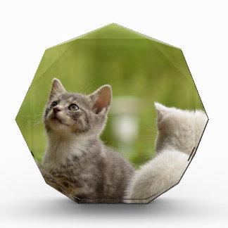 Récompense chat