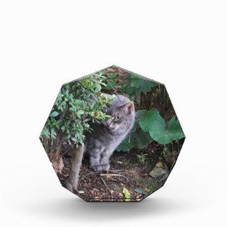 Récompense chat dans un jardin