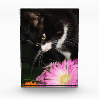 Récompense Chat et fleurs de Charli