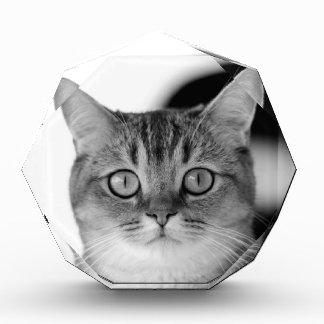Récompense Chat noir et blanc regardant directement vous
