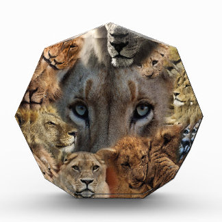 Récompense Lions heureux