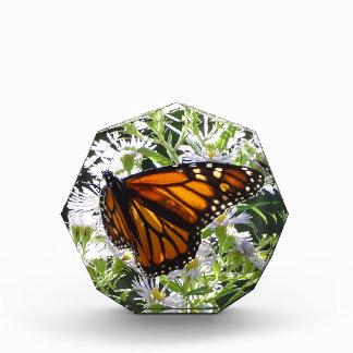 Récompense Papillon de monarque