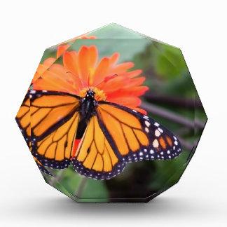 Récompense Papillon de monarque sur la fleur orange