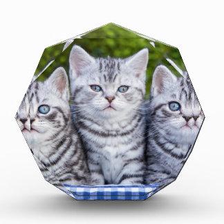 Récompense Trois jeunes chats tigrés argentés dans le panier