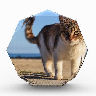 Récompense Visage mignon animal égaré de chat le jeune
