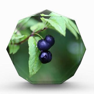 Récompenses En Acrylique Chèvrefeuille berried par noir (nigra de Lonicera)
