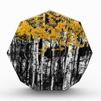 Récompenses En Acrylique Contact d'Aspen d'orange