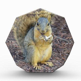 Récompenses En Acrylique Écureuil affamé heureux