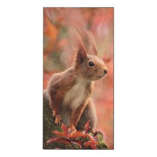 Regarder l'écureuil fixement
