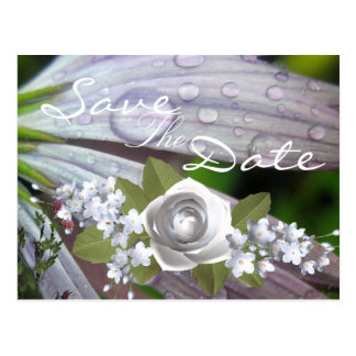 Regendruppel Lila Daisy Briefkaart