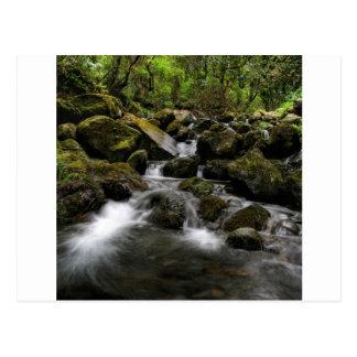 Région boisée de mousse de rivière de l'eau carte postale