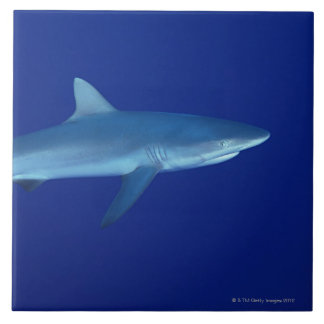 Requin Grand Carreau Carré