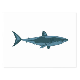 Requin Carte Postale