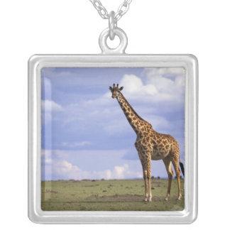 Réservation de jeu du Kenya, Mara de masai. Girafe Collier