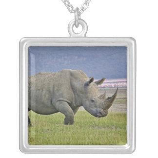 Rhinocéros et éloigné blancs peu de flamants, collier