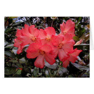 Rhododendron Carte