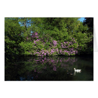 Rhododendrons, lac park de Roath, Cardiff Carte