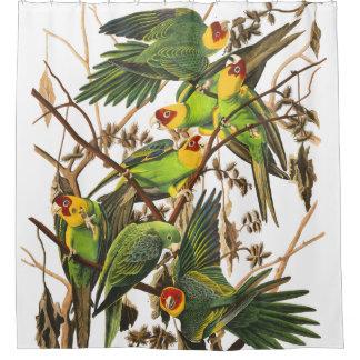 Rideau en douche d'Audubon de faune d'oiseaux de