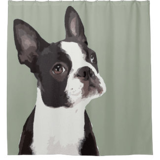 Rideau en douche de Boston Terrier