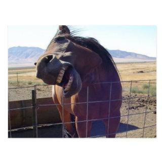 Rire de cheval carte postale