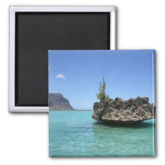 Roche en cristal composée de corail magnet carré