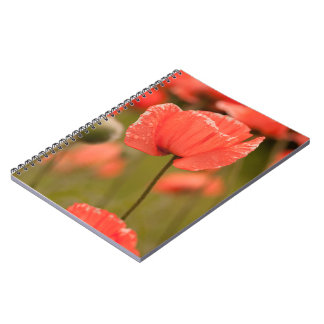 Rode Papaver Ringband Notitieboek