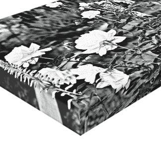 Rose blanc dans l'art noir de toile de jardin