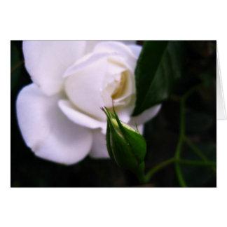 Rose blanc et carte de note rose de bourgeon