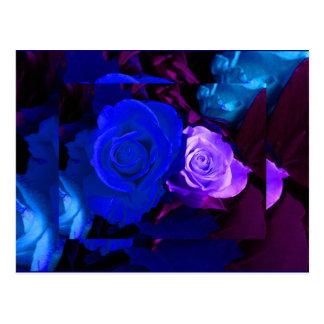 Rose bleu de pourpre cartes postales