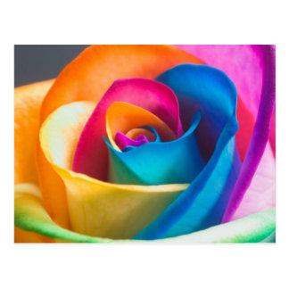 Rose coloré cartes postales